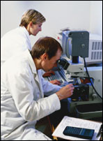 Estudios sobre ribavirina