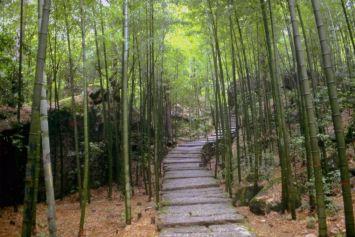 Jardín de bambu