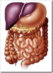 tracto_digestivo