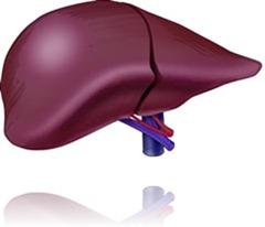 hepatitis-liver