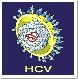 hcv_virus_hepatitis_c