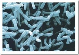 bifidobacterias-para-cancer-higado