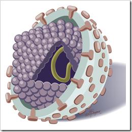 HepC-virus