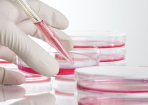 higado-celulas-investigacion