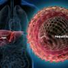 webmd_rf_photo_of_liver_and_hepatitis_virus