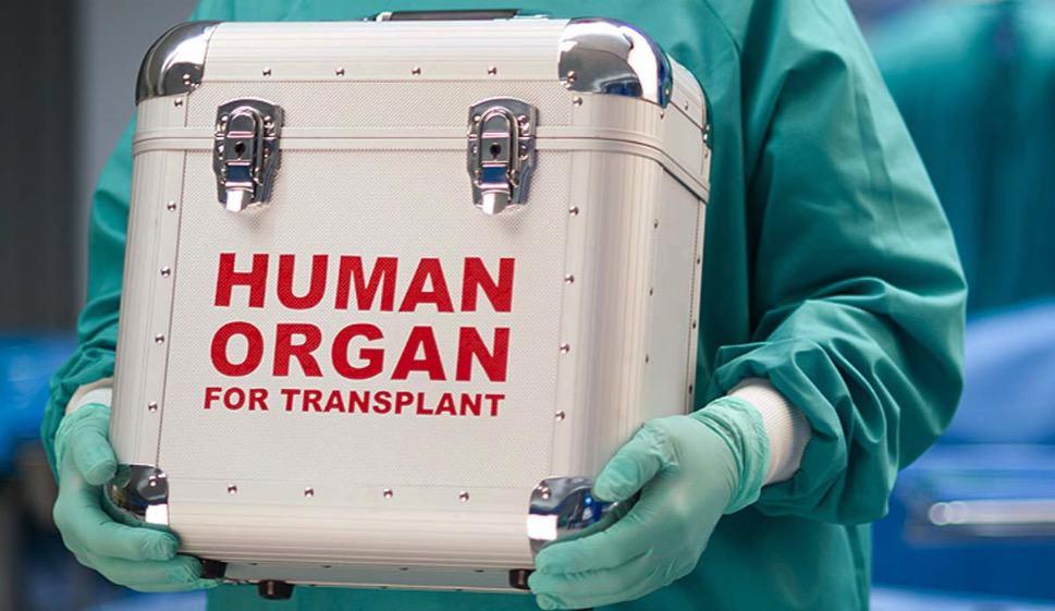 caja para transporte de órganos