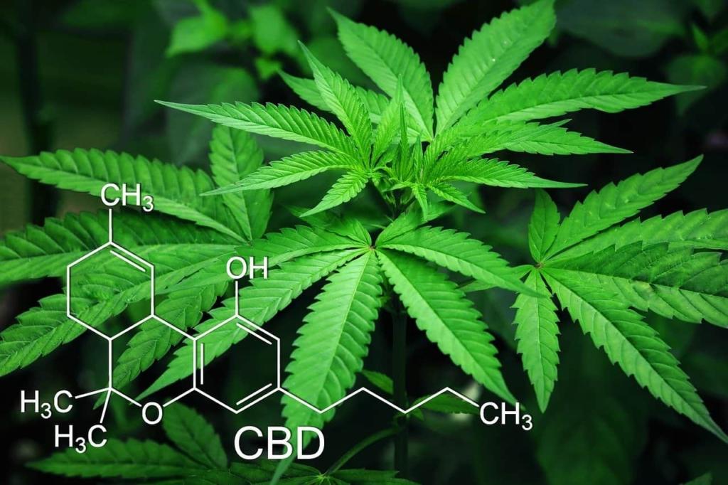 hojas de cannabis y su composición química